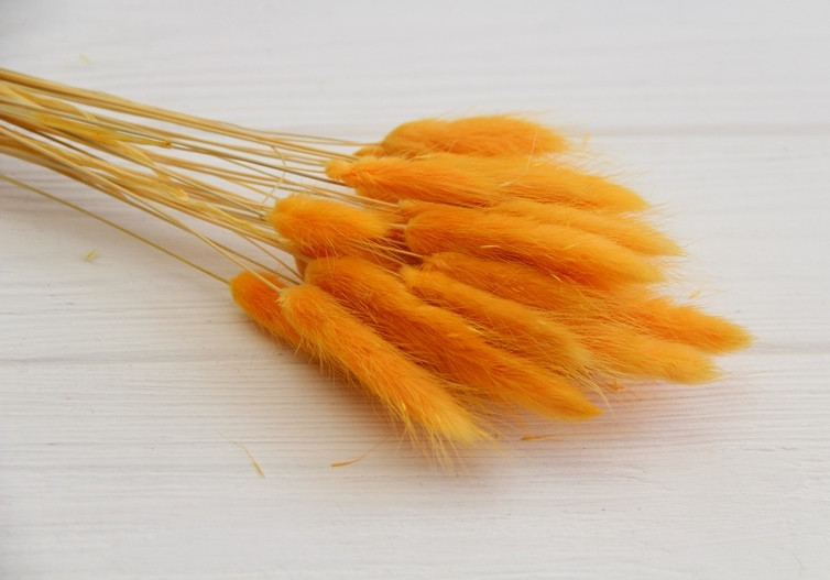 Лагурус стабилизированный ,  желто - гарячий     30 шт