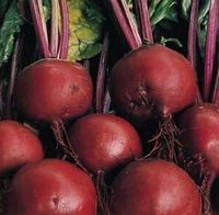 Семена свеклы Бонел, Hazera 1 кг | профессиональные