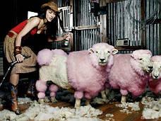 Оборудование по уходу за козами и овцами