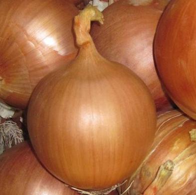 Семена лука Фронтино F1, Hazera 250 000 семян   профессиональные