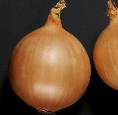 Семена лука Дормо F1, Hazera 250 000 семян | профессиональные