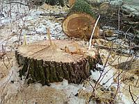 Спил, срезание, обрезка деревьев Бровары