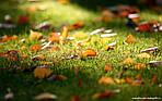 Основні рекомендації по догляду за газоном.