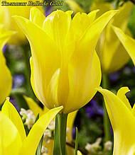 Тюльпан Ballade Gold (Балада Голд)