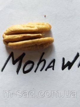 Саджанці горіха Пекан Мохав (однорічні), фото 2