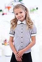 Блузка Свит блуз мод. 5007к в горошек на короткий рукав р.140