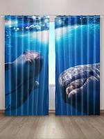 «Дельфины»
