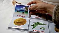 Картки Домана з фактами МІНІ 1 набір 40шт