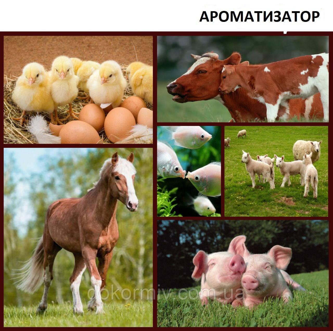 Ароматизатор в корм для животных