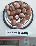 Фундук Барселонский (отводки 1 год)средне ранний,крупно плодный