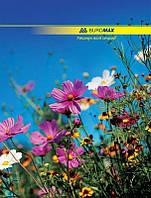 Тетрадь А4, 96 л., Buromax , офсет, кл., карт. тв., цветная