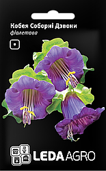 Семена Кобея Соборные Звоны фиолетовая 0,2г LEDAAGRO