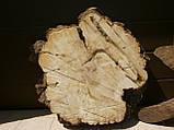 Слэб клён,кап, фото 2