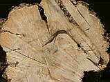Слэб клён,кап, фото 3