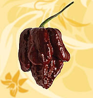 Перець Суперхот, Trinidad Scorpion Moruga Brown, Moruga Chocolate, Superhot, 10-12г, Україна, Б