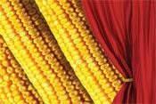 Купить Семена кукурузы Фурио