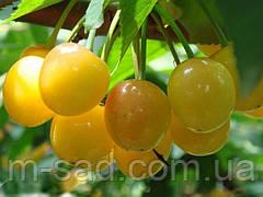 Саженцы черешни Дрогана (летний сорт,средний срок созревания)