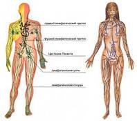 Очистка лимфатической системы