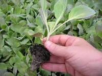 Как огороднику заработать в июне-июле на выращивании и продаже овощей и зелени