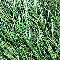 Искусственная трава - JUTAgrass - Winner 40/160