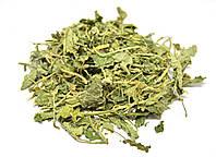 Мелисса лекарственная трава, фото 1