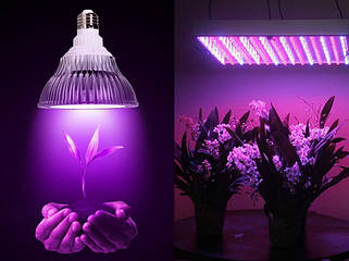 Фіто світильники і лампи