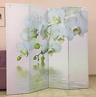 Ширма Орхидея, фото 1