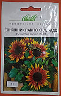 Семена цветов Подсолнух Пакито колорадо 1г Профессиональные семена1236251