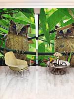 Фотоштора Зеленые заросли (15126_1_1)