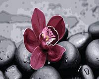 Картина по номерам Орхидея на камнях