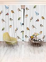 Фотоштора Различные виды птиц (19516_4_1)