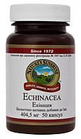 Эхинацея НСП Echinacea NSP - 50 кап - NSP, США