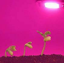 Светодиодный модуль 20 Вт 220 в FloraLED для растений, фото 3