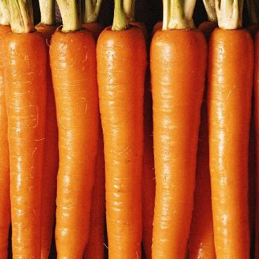 Семена моркови Титан F1, 25 000 семян (2.0-2.4), Lark Seeds