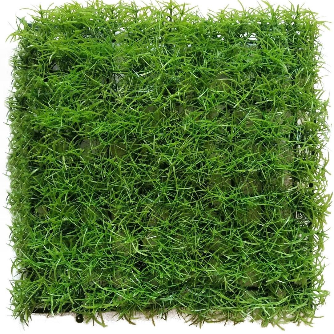 Трава коврик кохея венечная .25*25 см
