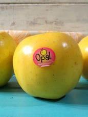 Яблуня Опал ( імунний сорт скороплідний), фото 3