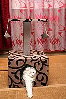 Когтеточка-домик,лежак для кошки,лежанка,лежаки,ліжко,ліжко для котів,когтеточка,царапка, фото 3