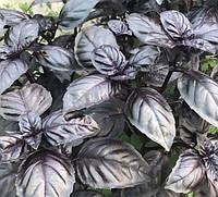 Семена базилика Виолет Кинг, Lark Seeds 50 грамм | профессиональные