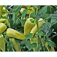 Семена перца Сильви F1, 500 семян, Lark Seeds