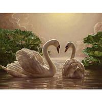 Картина по номерам / обложка . Пара лебедей 40х50см арт. КНО301