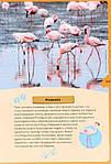 Животные планеты. Интерактивная детская энциклопедия с магнитами (в коробке), фото 5
