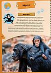 Животные планеты. Интерактивная детская энциклопедия с магнитами (в коробке), фото 6