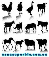 Наборы для ветеринарно-санитарной экспертизы