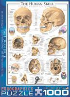 Классический пазл EuroGraphics Человеческий череп 1000 элементов (6000-0306)