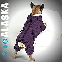 Одежда для собак , Теплый, непромокаемый комбинезон для мопсов, французских бульдогов. Аляска (сереневый)