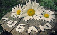 """Вафельная картинка """"Цветы"""" 27"""