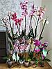"""Подставка для цветов на 14 колец """"Фаленопсис-1"""""""