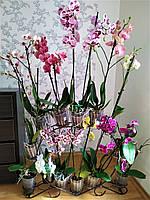 Фаленопсис-1, подставка для цветов на 12-14 колец, фото 1