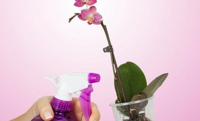 Правильный выбор удобрений для орхидеи
