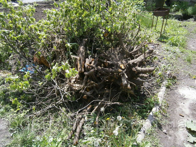 Спил деревьев и корчёвка пней в Днепропетровске